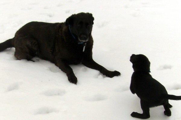 Old Dog-Young Pup's First Snow